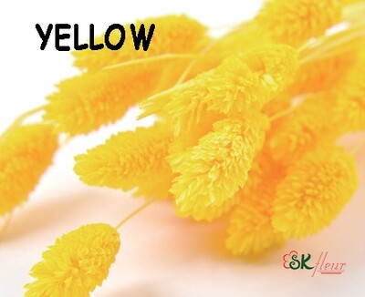 Phalaris DRIED / Yellow