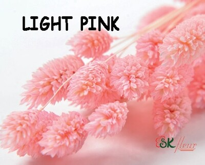 Phalaris DRIED / Light Pink