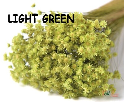 Marcela DRIED / Light Green