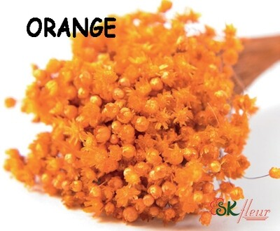 Marcela DRIED / Orange