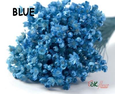 Marcela DRIED / Blue