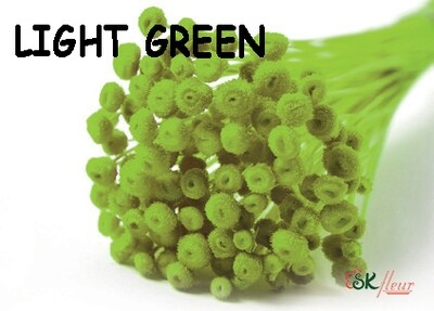 Amarelino DRIED / Light Green
