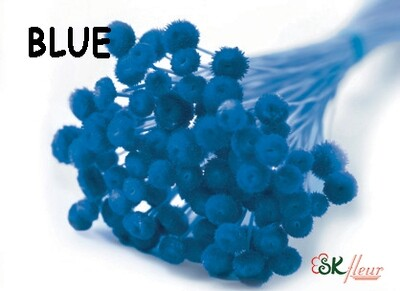 Amarelino DRIED / Blue