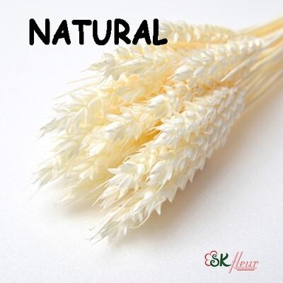 Trigo Wheat DRIED / Natural