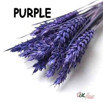 Trigo Wheat DRIED / Purple