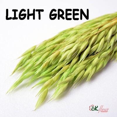 Avena Oats DRIED / Light Green