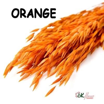 Avena Oats DRIED / Orange