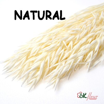 Avena Oats DRIED / Natural