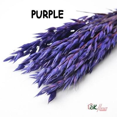 Avena Oats DRIED / Purple