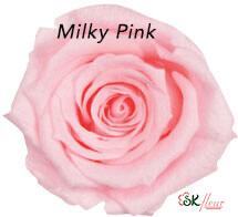 Baby Rose / Milky Pink