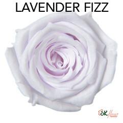 Baby Rose / Lavender Fizz