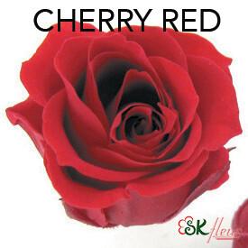 Piccola Blossom Rose / Cherry Red