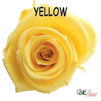 Mediana Rose / Yellow