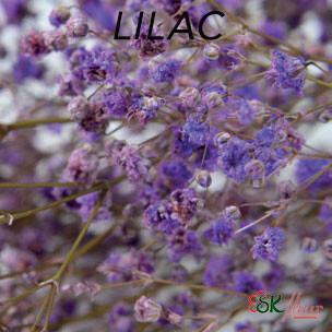 Gypsophila / Lilac
