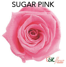 Baby Rose / Sugar Pink