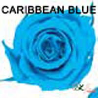 Baby Rose / Caribbean Blue