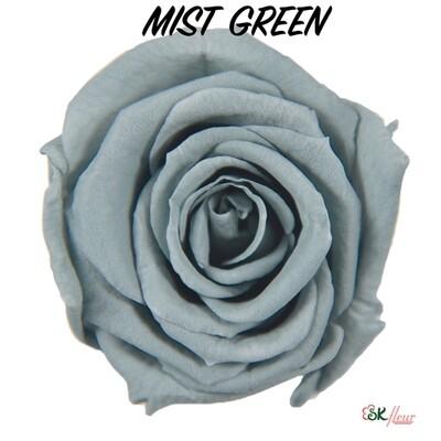 Baby Rose / Mist Green