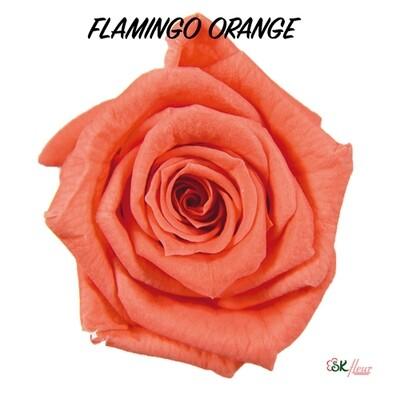 Baby Rose / Flamingo Orange