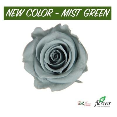 Mediana Rose / Mist Green