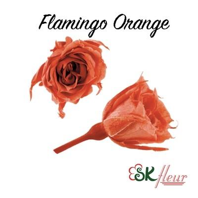 Micro Rose / Flamingo Orange