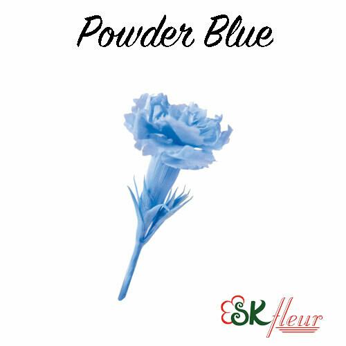 Micro Carnation / Powder Blue