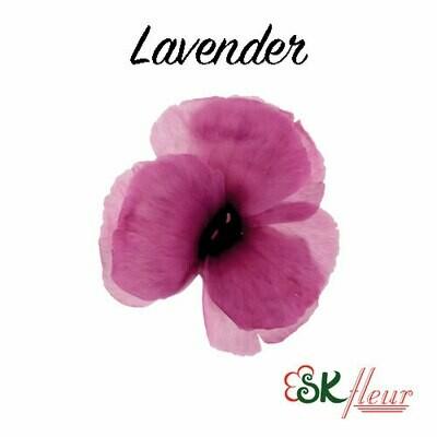 Dianthus / Lavender