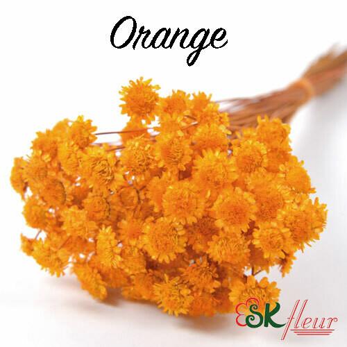 Margaret DRIED / Orange