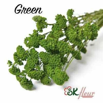 Yarrow DRIED / Green