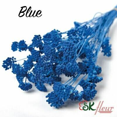 Yarrow DRIED / Blue
