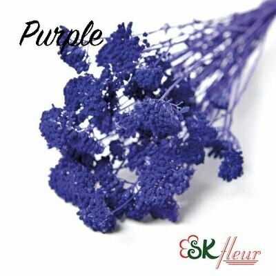 Yarrow DRIED / Purple