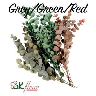 Eucalyptus Cinerea Silver / Red