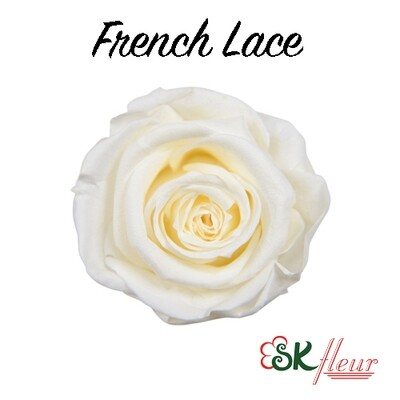 Mediana Rose / French Lace