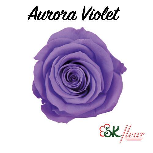 Baby Rose / Aurora Violet