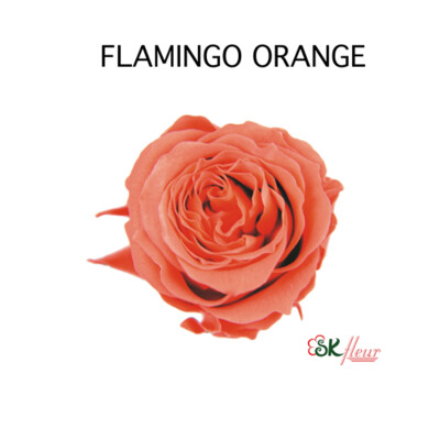 Piccola Blossom Rose / Flamingo Orange