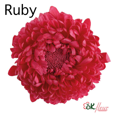 Aster / Ruby