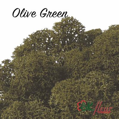 Moss/ Olive Green