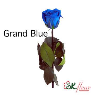 Short Stem Rose / Grand Blue
