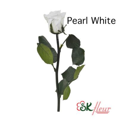 Short Stem Rose / Pearl White