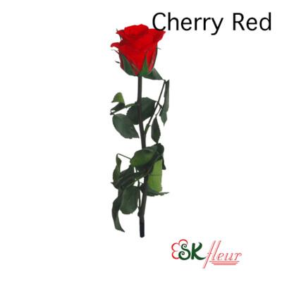 Short Stem Rose / Cherry Red