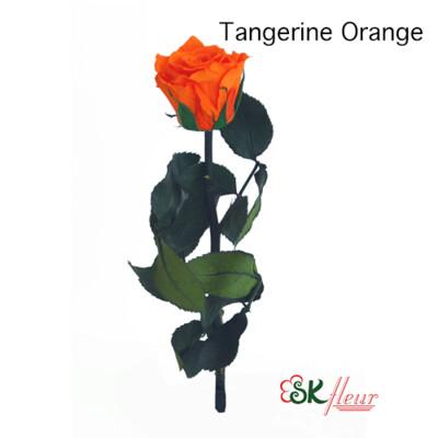 Short Stem Rose / Tangerine Orange