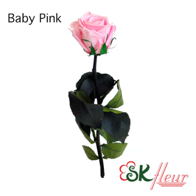 Short Stem Rose / Baby Pink