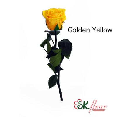 Short Stem Rose / Golden Yellow