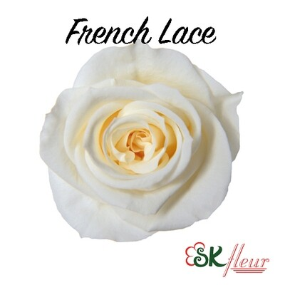 Spray Rose / French Lace