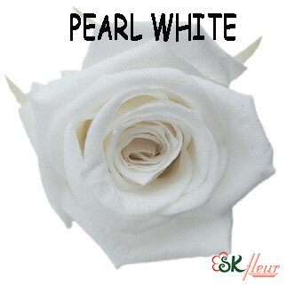 Standard Rose / Pearl White