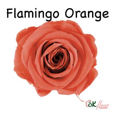 Mediana Rose / Flamingo Orange