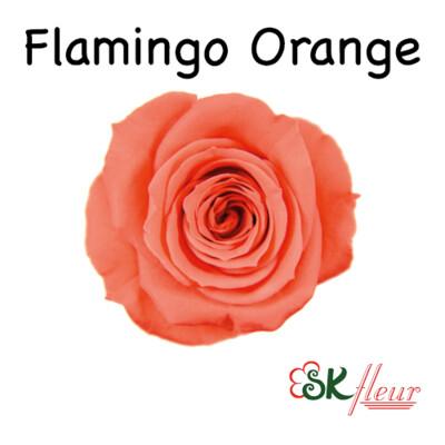 Spray Rose / Flamingo Orange
