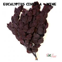 Eucalyptus Cinerea / Wine