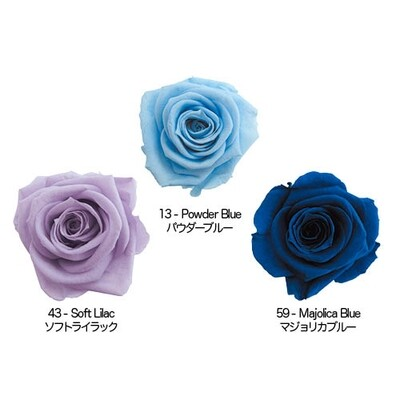 Standard Rose / Blue Mix