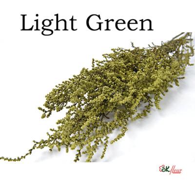 Stoebe / Light Green