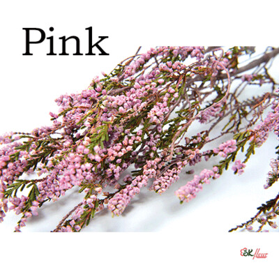 Erica / Pink